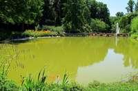 Warum schimmern die Teiche in Bad Bellingen so grün?