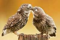 Küssen ist mehr als nur Lippenkontakt