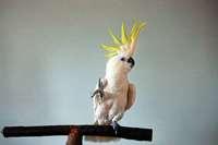 Dieser Papagei hat Sinn für Kreativität