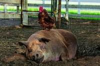 Doku: Der Traum von der eigenen Farm