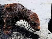 Fotos: In Kalifornien werden vergiftete und ausgehungerte Seelöwen gerettet