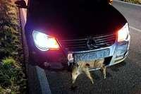 Wildschweine queren nachts die L125 – und ein Autofahrer kann nicht mehr rechtzeitig bremsen