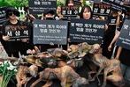 Fotos: Südkoreaner wollen Hundeschlachterei beenden