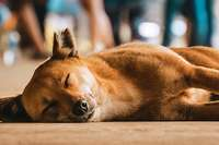 Warum streunende Tiere keine Urlaubsmitbringsel sind