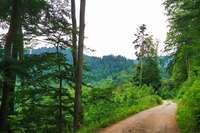 So pflegt der Schwarzwaldverein Sulzburg die Wanderwege
