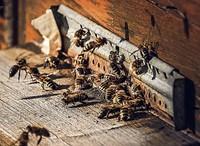 Bienenweg wird eröffnet