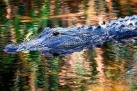 Aus Sorge um Alligatoren sollten in Tennessee keine Drogen im Klo landen
