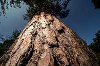 Wie Bäume und Ackerboden das Klima beeinflussen