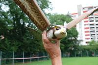 Falken-Drohne soll Krähen vertreiben – ein Testflug in der Schweiz
