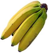 Pilz macht Bananen zu schaffen