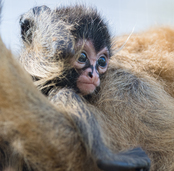 Nachwuchs und Neulinge im Zoo Basel