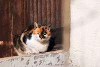 Friesenheimer Tierärztin erklärt, warum Katzen Wasser nicht mögen