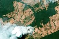 Der brennende Regenwald ist eine Tragödie für die ganze Welt