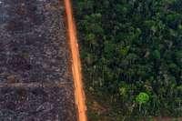 Amazonas-Brände: Minister Müller fordert Verzicht auf billige Soja-Importe