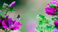 Kabinett beschließt Programm für mehr Insektenschutz