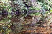 Bannwald kommt mit Klimawandel klar