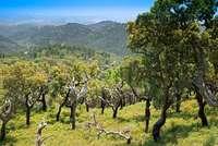 Das hügelige Hinterland Portugals bietet unberührte Natur