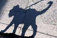 Hundedieb entführt Welpe am helllichten Tag vor dem Supermarkt