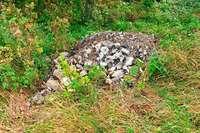 Im Wald bei Rheinfelden wurde eine Tonne Bauschutt illegal abgeladen