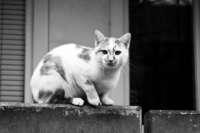Warum eine Katzensitterin jetzt vor Gericht scheiterte