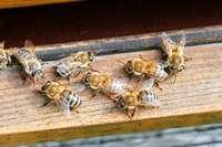 Die Bienenliebe braucht Taten