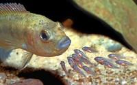 Alles rund ums Aquarium: Am Wochenende ist großer Tag der Aquaristik bei den Kleintierzüchtern in Freibur-St.Georgen