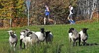 Lang, länger, Schwarzwald-Marathon