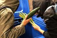 """Gericht wertet """"Containern"""" von Lebensmitteln als Diebstahl"""
