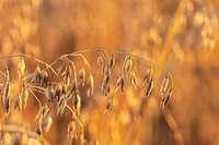 Schwarzwaldmilch will ab Frühjahr 2020 vegane Haferdrinks vermarkten