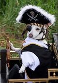 Eine tierische Verkleidungsparade