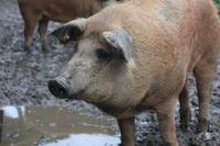 Buchenbacher Landwirt setzt auf seltene Tierarten und Bio-Standard