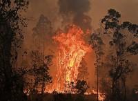 Verheerende Buschfeuer in Australien