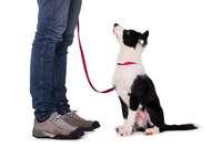 Finanzielle Anreize für Hundeführerschein – ein Vorbild für Südbaden?