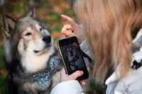 """""""Petfluencer"""" preisen Hundefutter an und sind beliebte Werbebotschafter"""