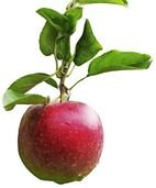 Obst und Beeren für alle