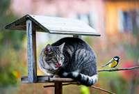 Forscher fordern Hausarrest für Katzen