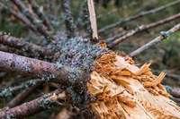 Naturschützer wollen Totholz im Wald schützen