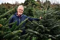 In Freiburg gibt's Weihnachtsbäume, die in der Stadt gewachsen sind