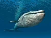 Mini-Krebse geben Walen Mega-Energie