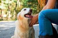 Was man beachten muss, wenn man sich einen Hund zulegen will