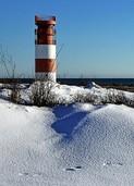 Insel der putzigen Robben