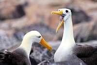Naturkatastrophe auf den Galapagos-Inseln abgewendet