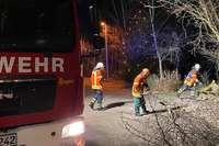 Biber sorgt für Feuerwehreinsatz in Laufenburg
