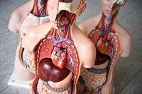 Spahns Vorschlag hätte die Probleme bei der Organspende nicht gelöst