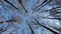 """""""Das geheime Leben der Bäume"""" – Doku und Autorenporträt in einem"""