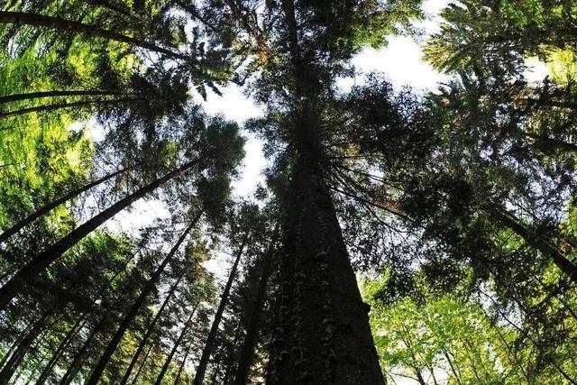 Freiburg sammelt Ökopunkte durch Verwaldung der Bahlinger Innenstadt
