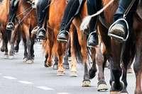 Einbrecher stehlen hochwertige Pferdesättel