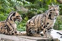 Wir verlosen vier Familieneintritte für den Zoo in Mulhouse