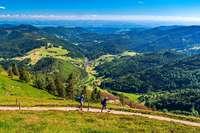 Wandern Sie auf dem Belchensteig mit dem Schwarzwaldverein!