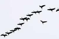 Warum verfliegen sich Zugvögel nicht?